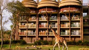 Jambo House - Animal Kingdom